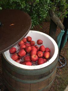 Apples-IMG_4256