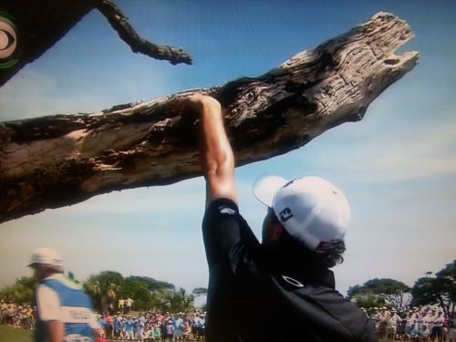 ball-in-a-dead-tree-branch-day-3-2012-pga-red